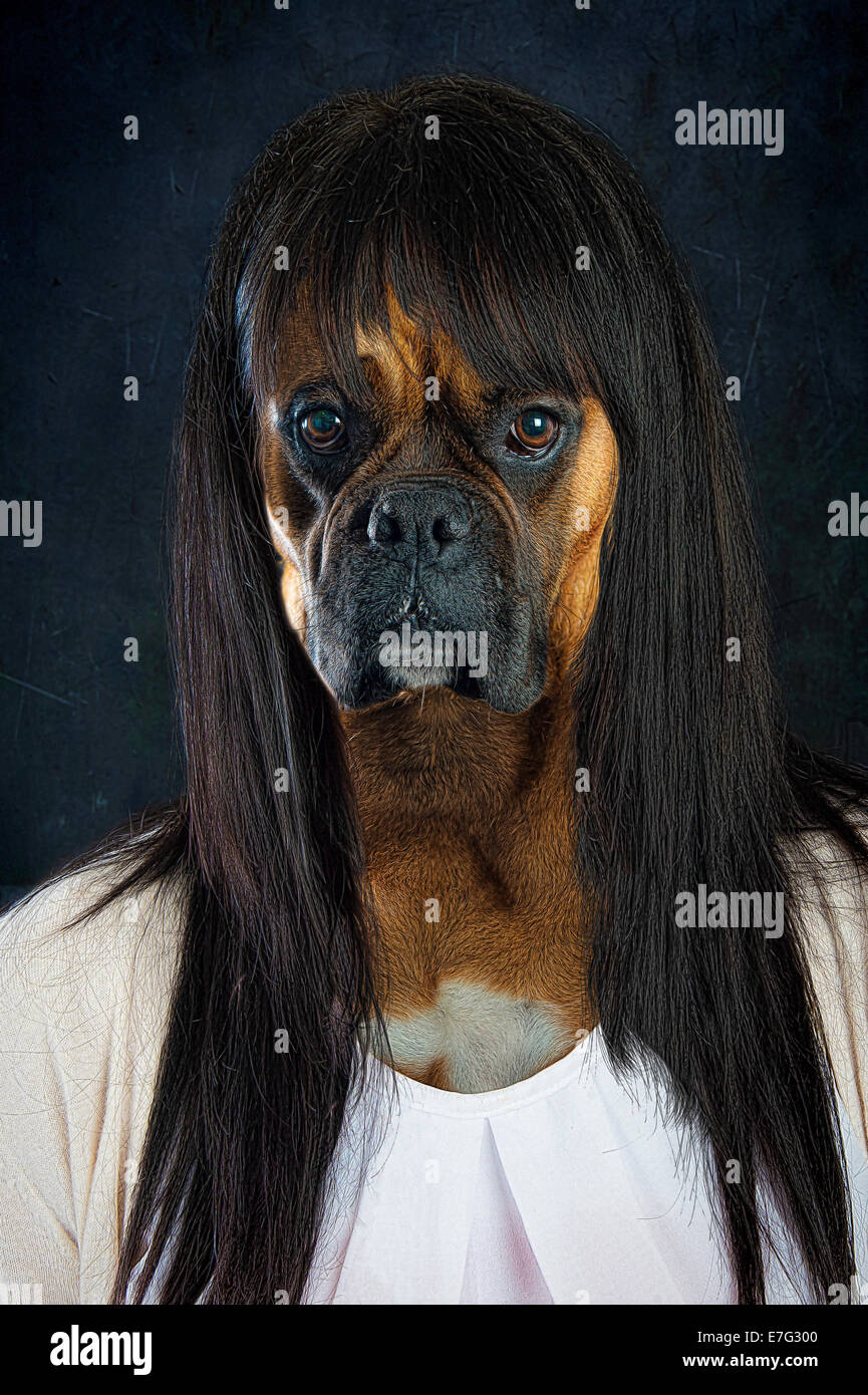 Human boxer dog woman - Stock Image