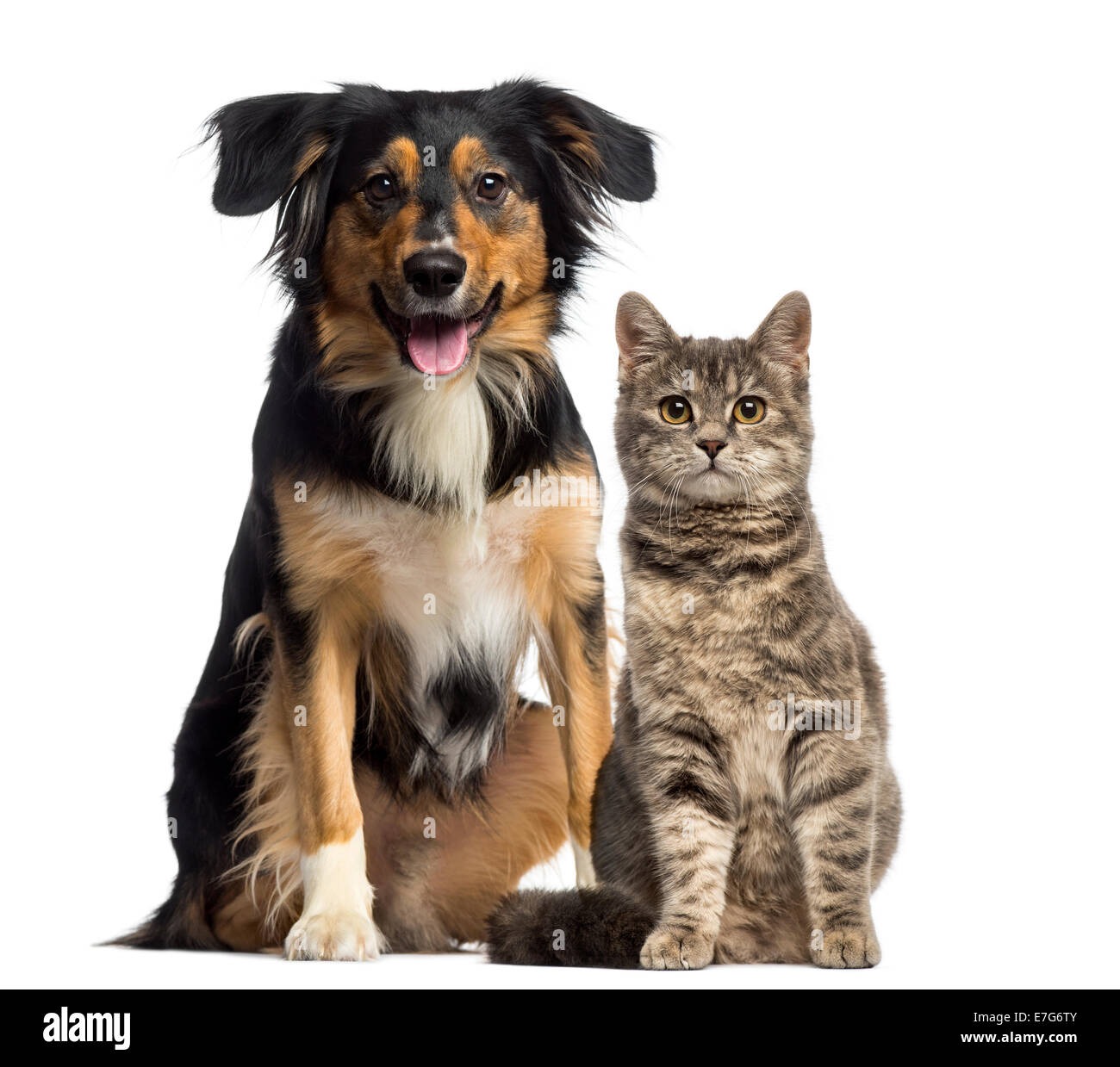 Cat and dog sitting together against white background - Stock Image