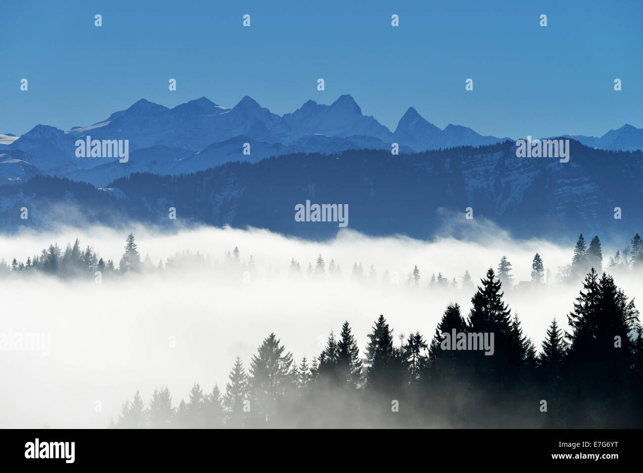 Coniferous forest in fog, behind Bernese Alps, Napf, Canton of Lucerne, Switzerland - Stock Image