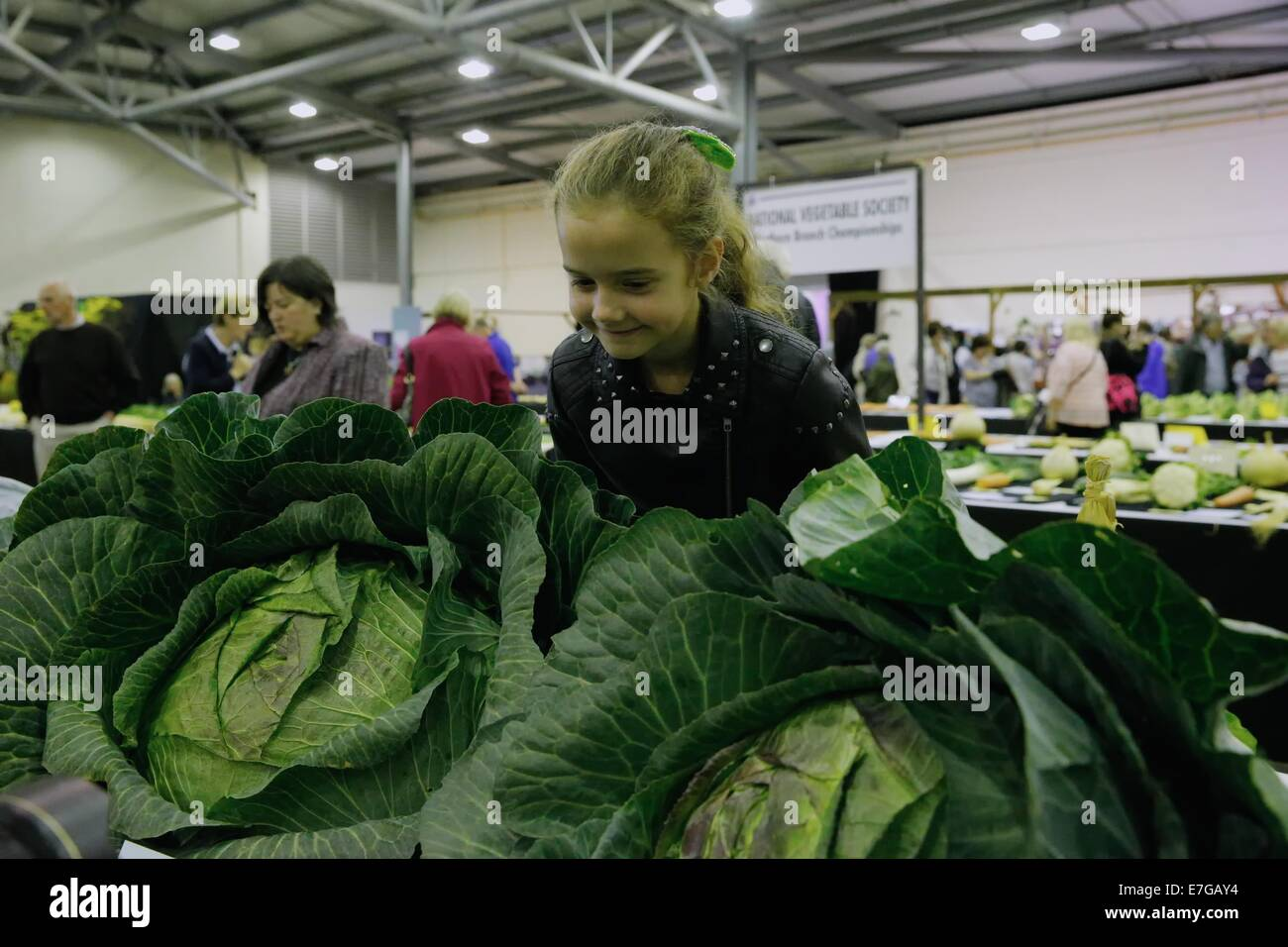 Young pretty girl leans over the giant cabbages - Stock Image