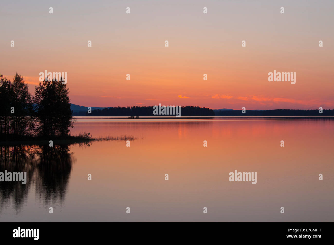 Silhouetted trees along Lake Siljan in summer at sunset, Dalarna, Sweden Stock Photo