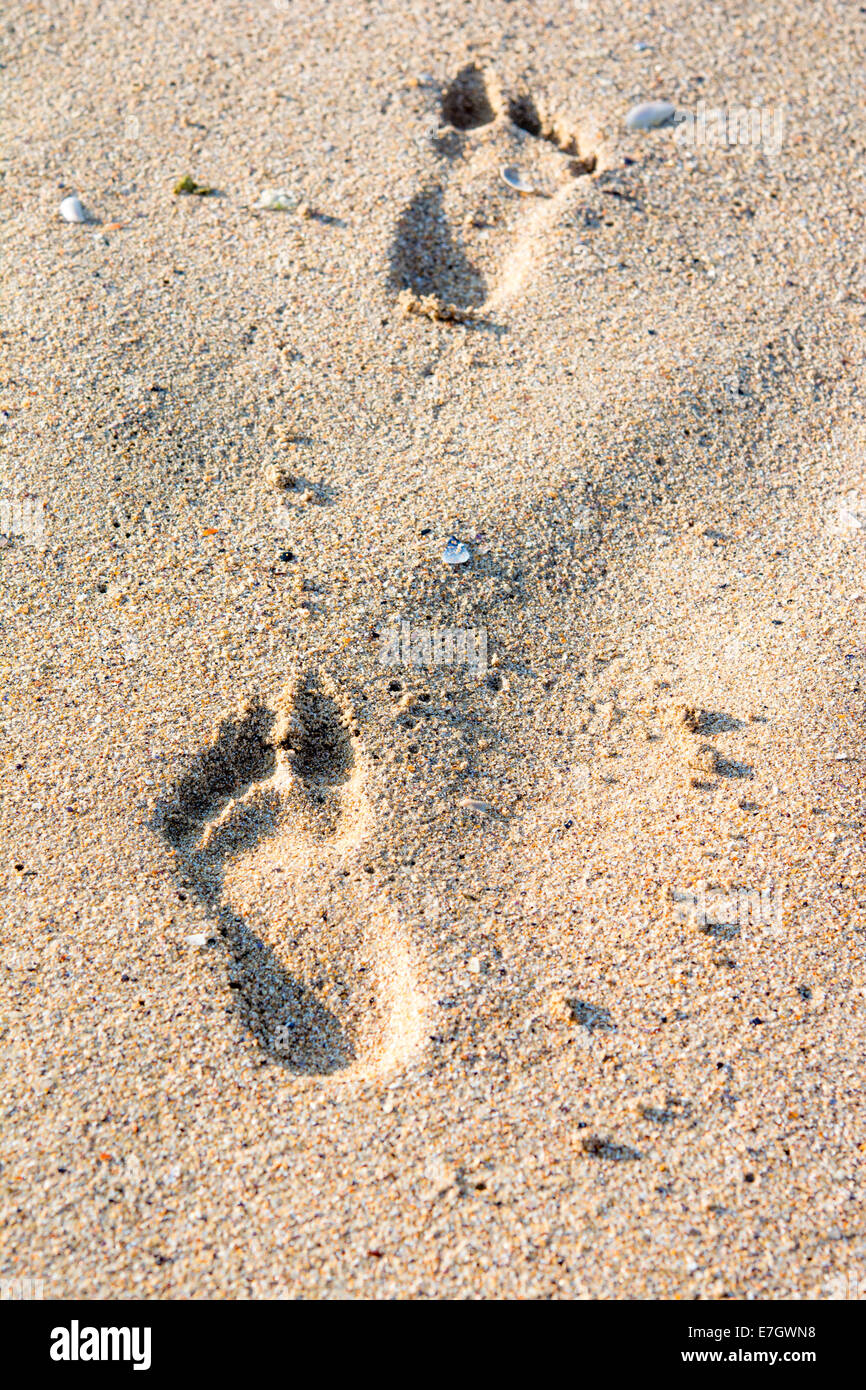 A footprint in golden sand on the shore of the sea - Stock Image