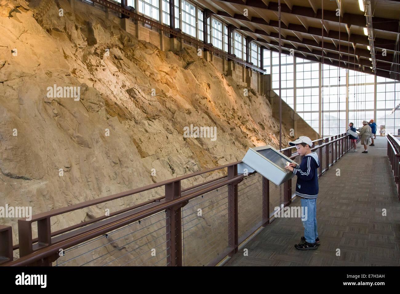 Jensen, Utah - A boy views dinosaur bones in the Quarry Exhibit Hall at Dinosaur National Monument. - Stock Image