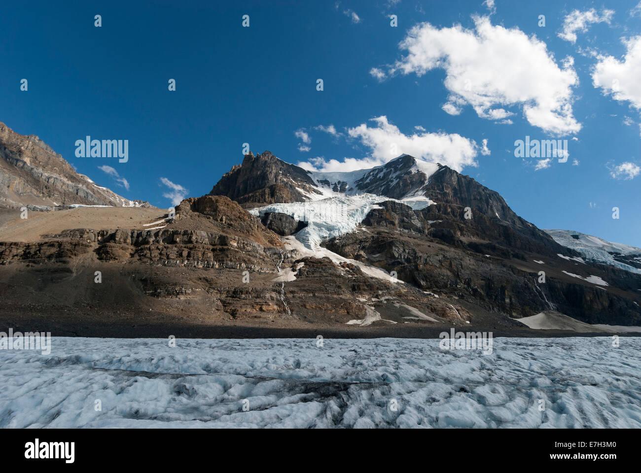 Elk203-7445 Canada, Alberta, Jasper National Park, Columbia Icefield, Athabasca Glacier - Stock Image