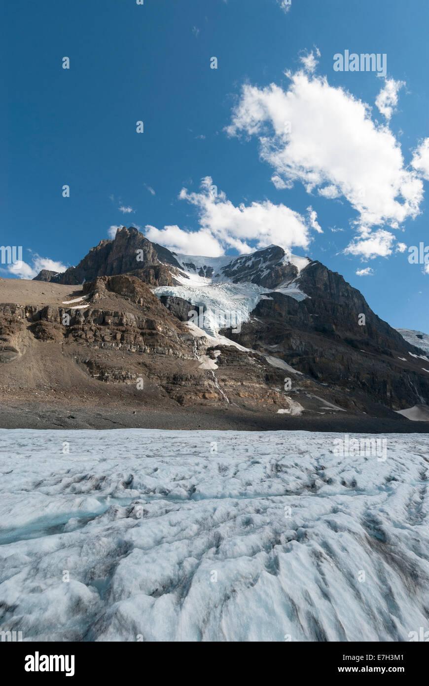 Elk203-7446v Canada, Alberta, Jasper National Park, Columbia Icefield, Athabasca Glacier - Stock Image