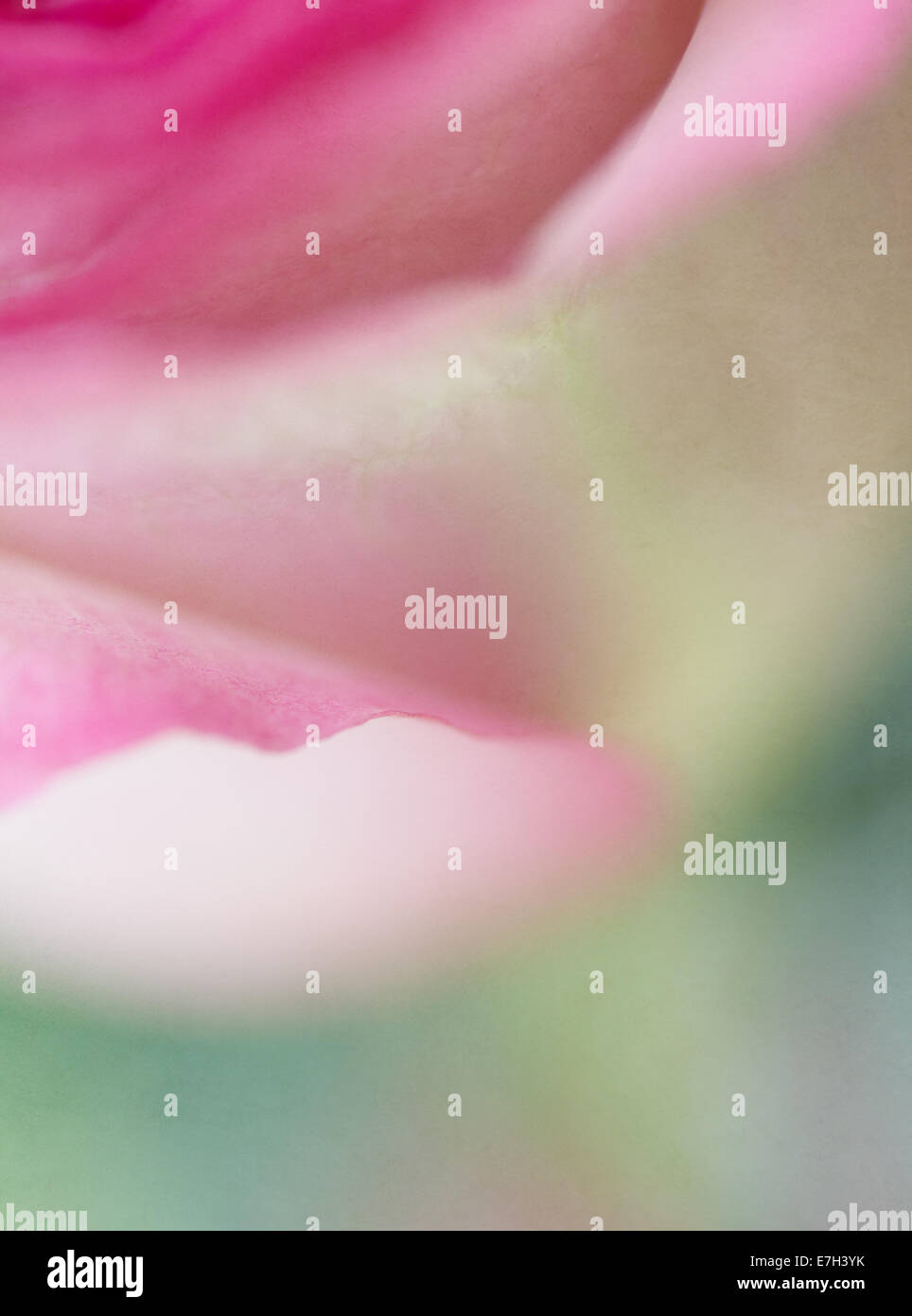 Pink Tulip with Texture Overlay - Stock Image