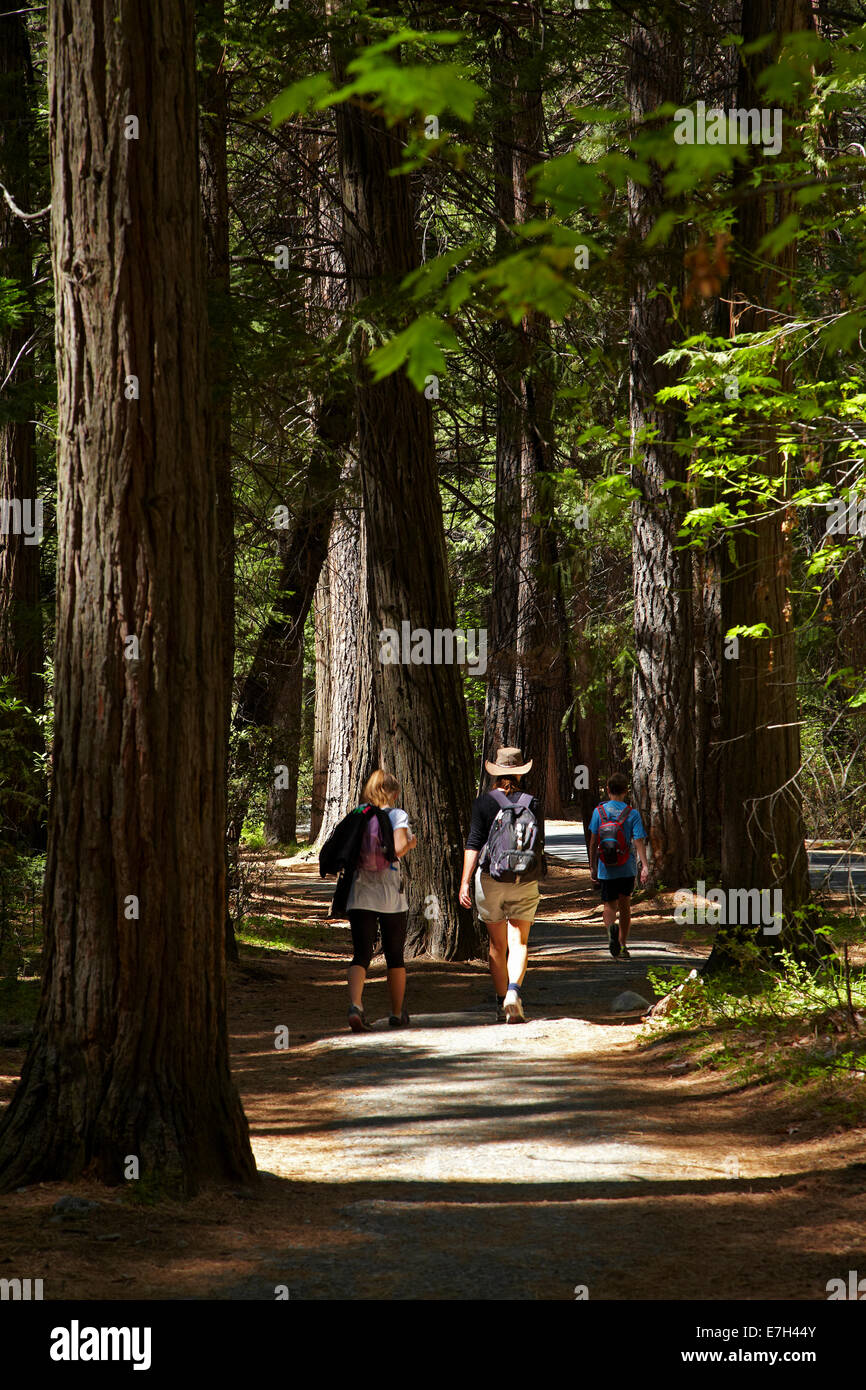 Family on walking track near Camp Curry and Upper Pines Campground, Yosemite Valley, Yosemite National Park, California, - Stock Image
