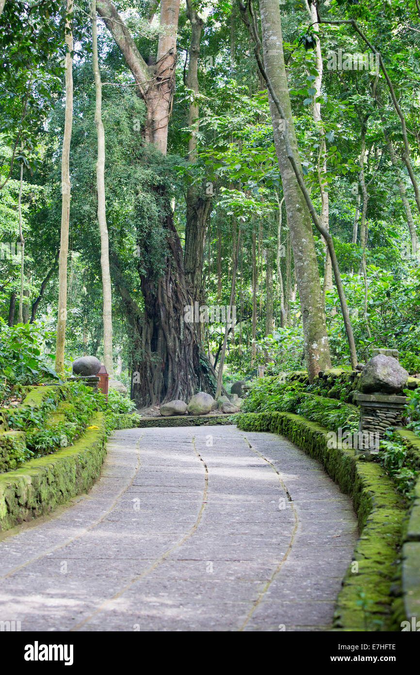 A footpath in Monkey Forest Sanctuary in Ubud, Bali,Indonesia - Stock Image