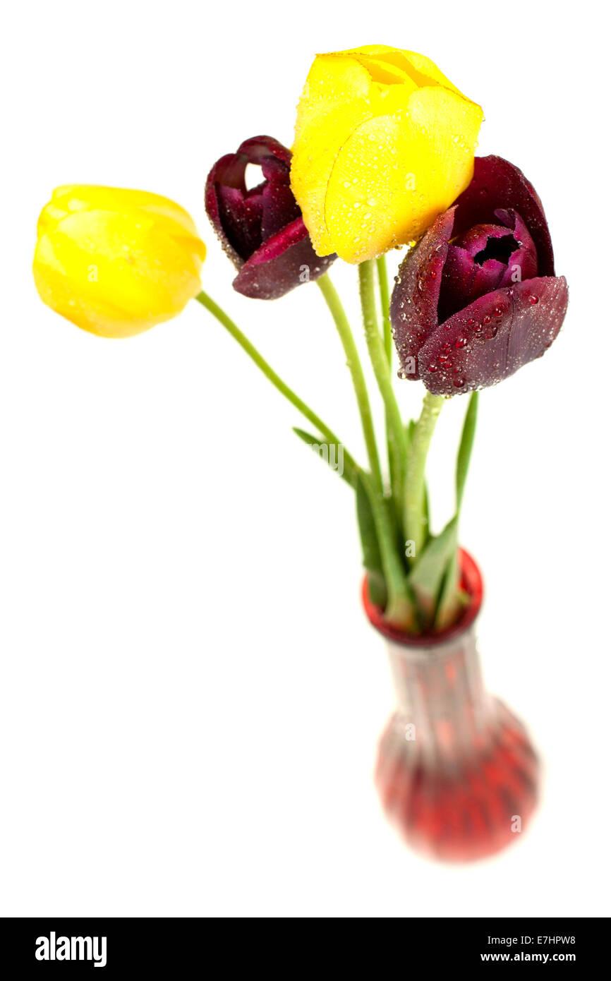 Colorful tulips in vase isolated on white background - Stock Image