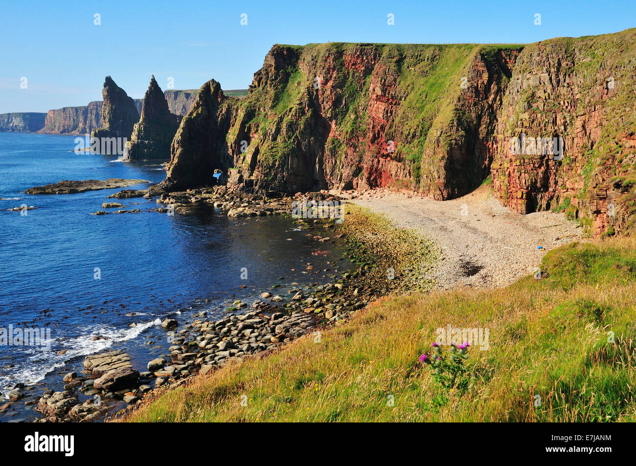 Duncansby Stacks pinnacles in the morning light, John o'Groats, Caithness, Sutherland and Easter Ross, Highlands, - Stock Image