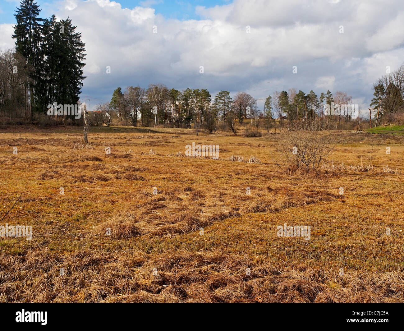 Switzerland, canton Zurich, Schwerzenbach, humid area, scenery, autumn, moor - Stock Image
