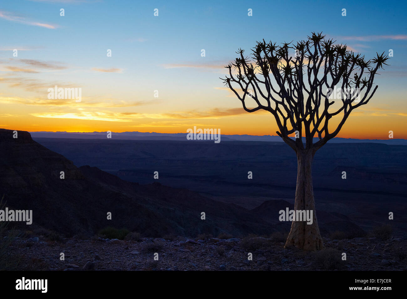 Africa, blue hour, cliff, Fish River, quiver tree, Namibia, sunrise, tree, - Stock Image