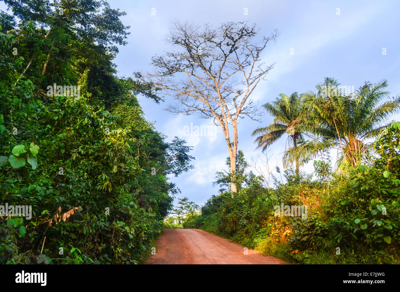 A dirt road of mud red earth in the countryside of Nimba County, Liberia, Africa - Stock Image