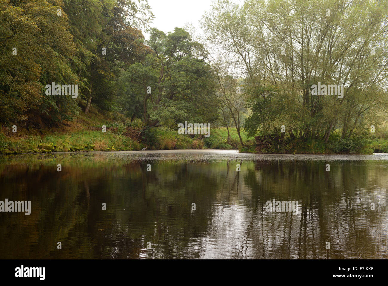Gainford, County Durham, UK. 19th September 2014. UK Weather.  A grey overcast start to the day along the banks Stock Photo