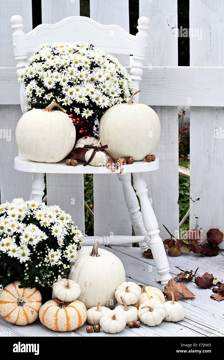 Beautiful white pumpkins and mums sitting on an old vintage chair on a porch in the autumn. - Stock Image