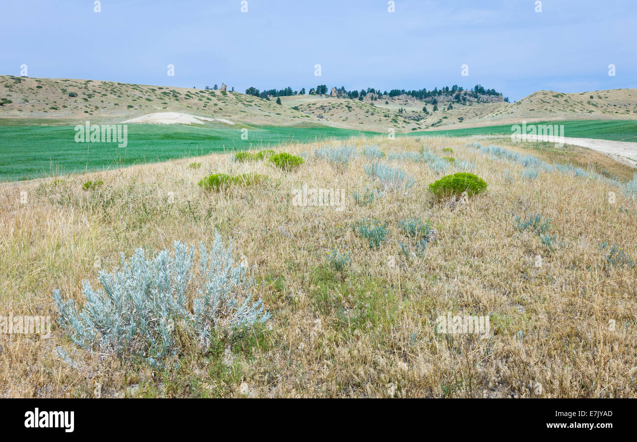 Agricultural crop  surrounded by dry scrub and hills under a bright sky near Vermillion, Nebraska, USA. - Stock Image