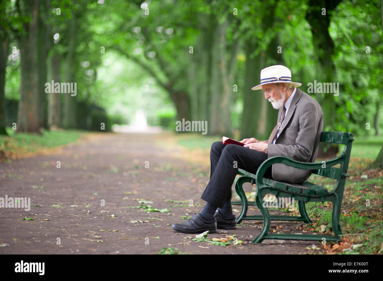 Senior Man Reading A Book On A Park Bench Stock Photo 73561176 Alamy