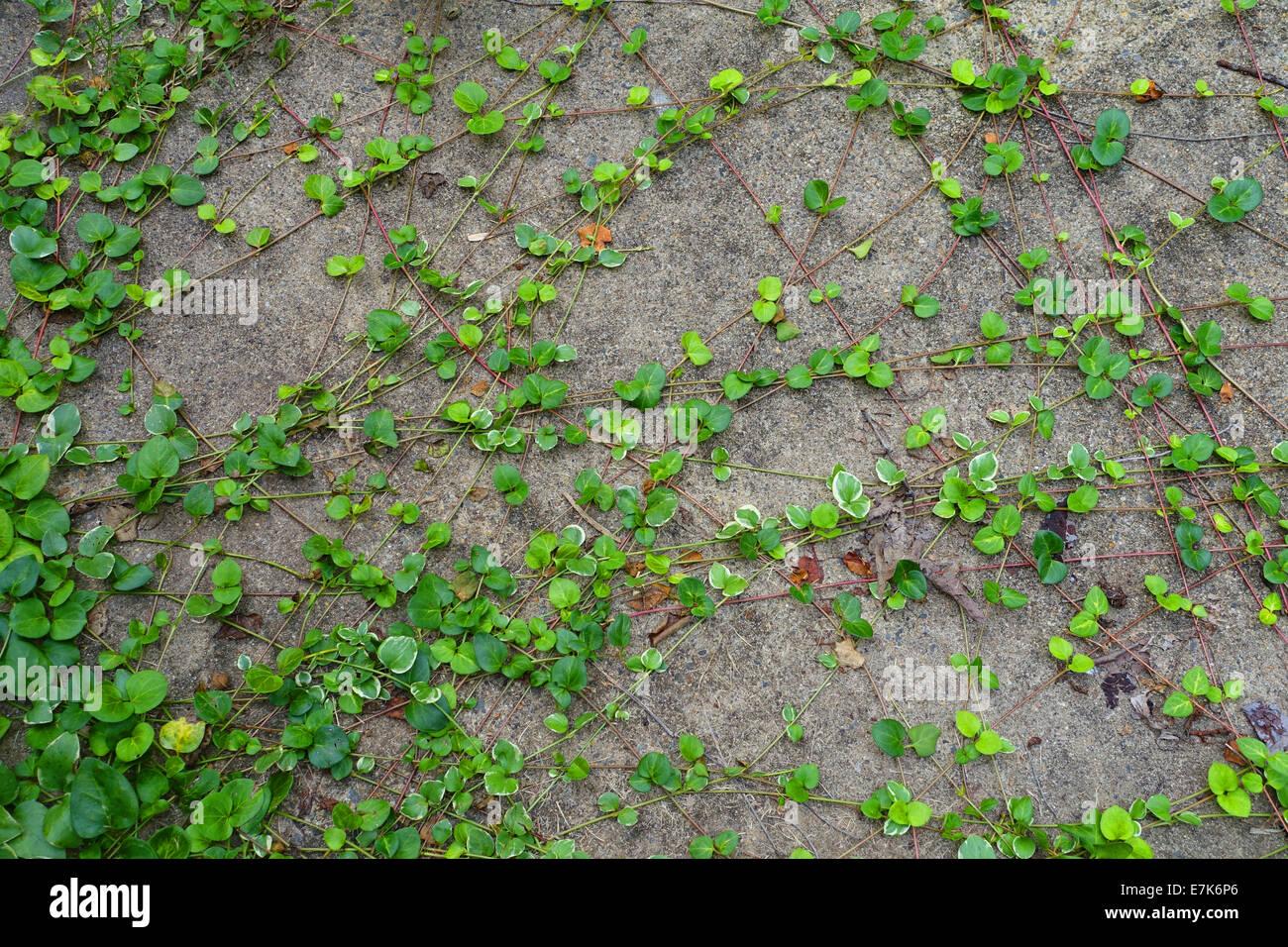 Invasive Weeds Stock Photos Amp Invasive Weeds Stock Images