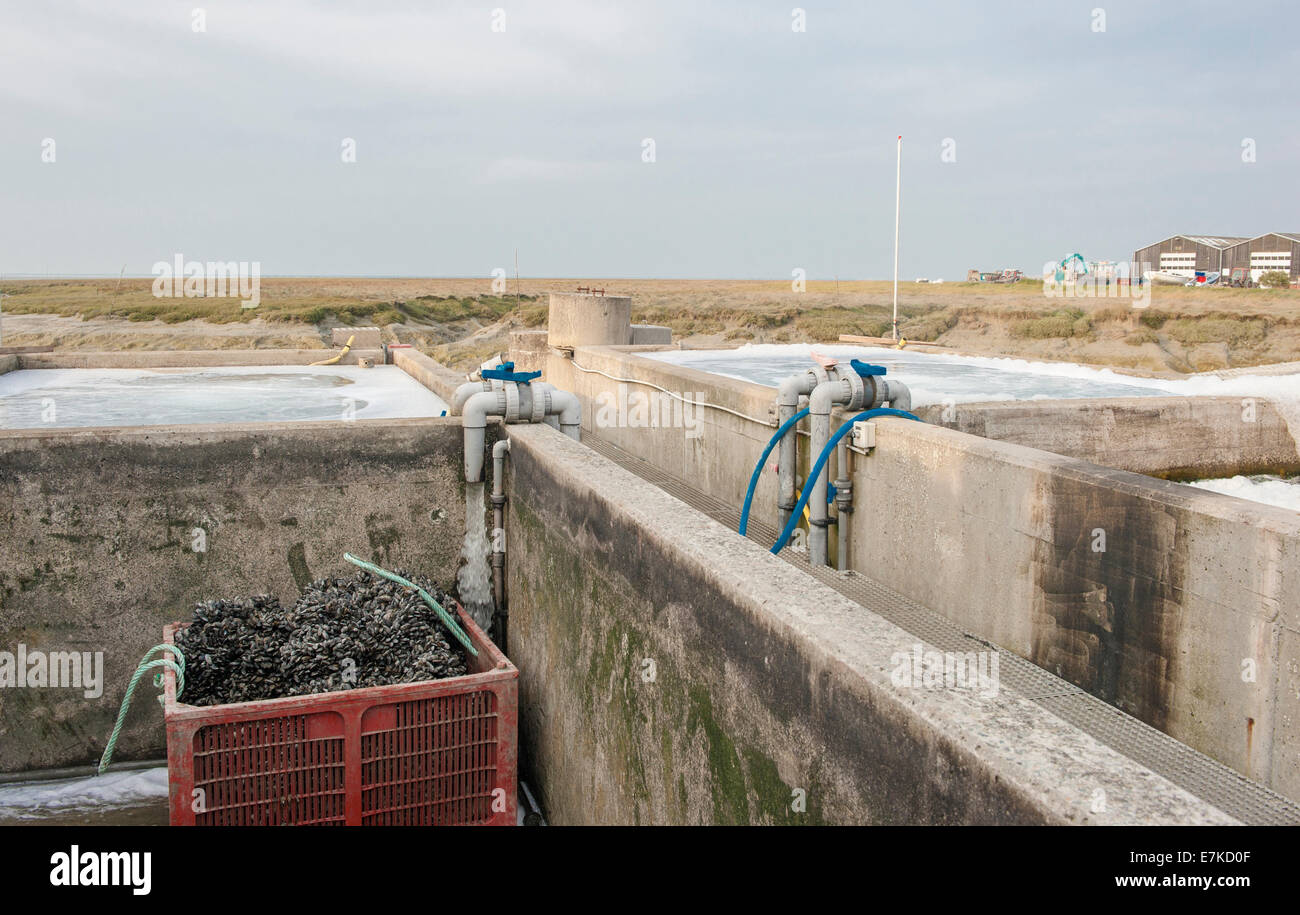 Watering basins for oysters at the Mont St Michel Bay, Brittany, France - Stock Image