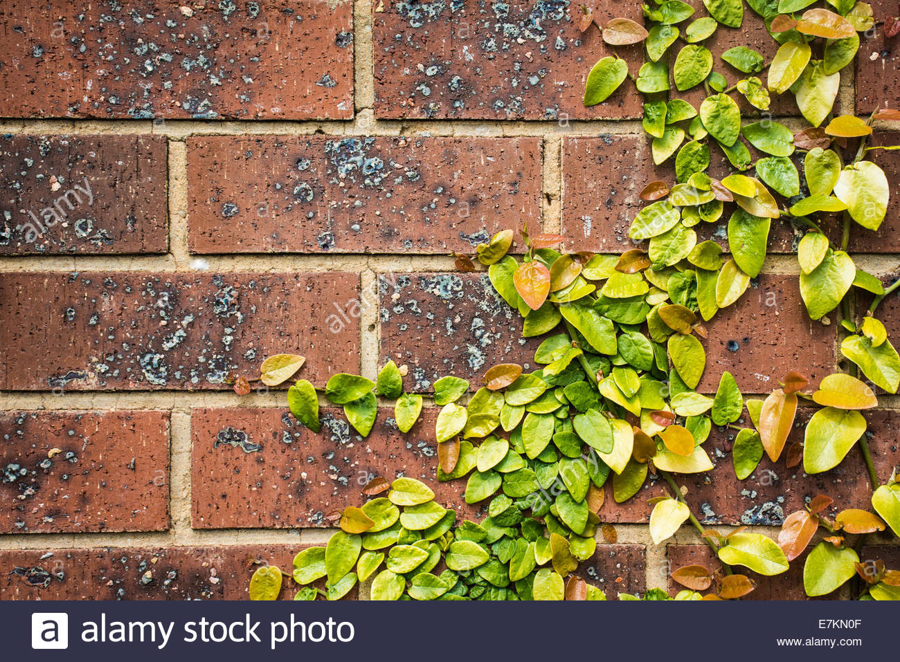 wall frame with colorful leaves margin. - Stock Image