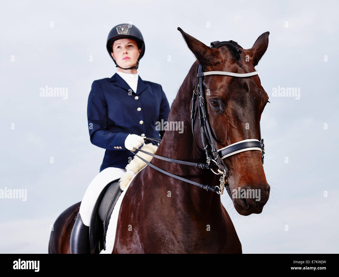 Brown horse and beautiful woman wearing horse riding apparel - focus on horse - Stock Image