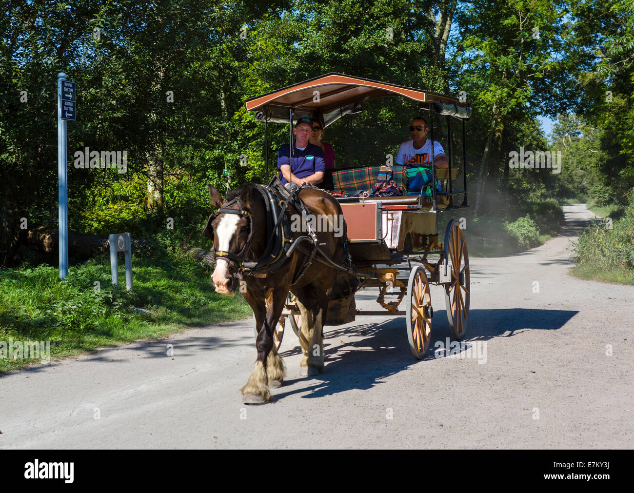 Ireland horse carriage stock photos ireland horse for Car carriage