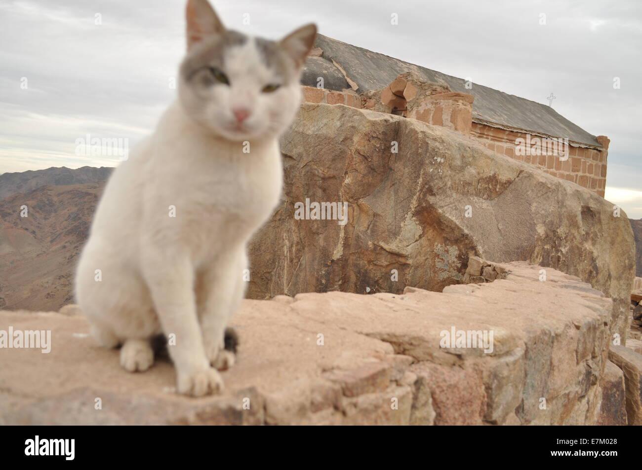 Egypt, the summit of Mount Sinai - Stock Image