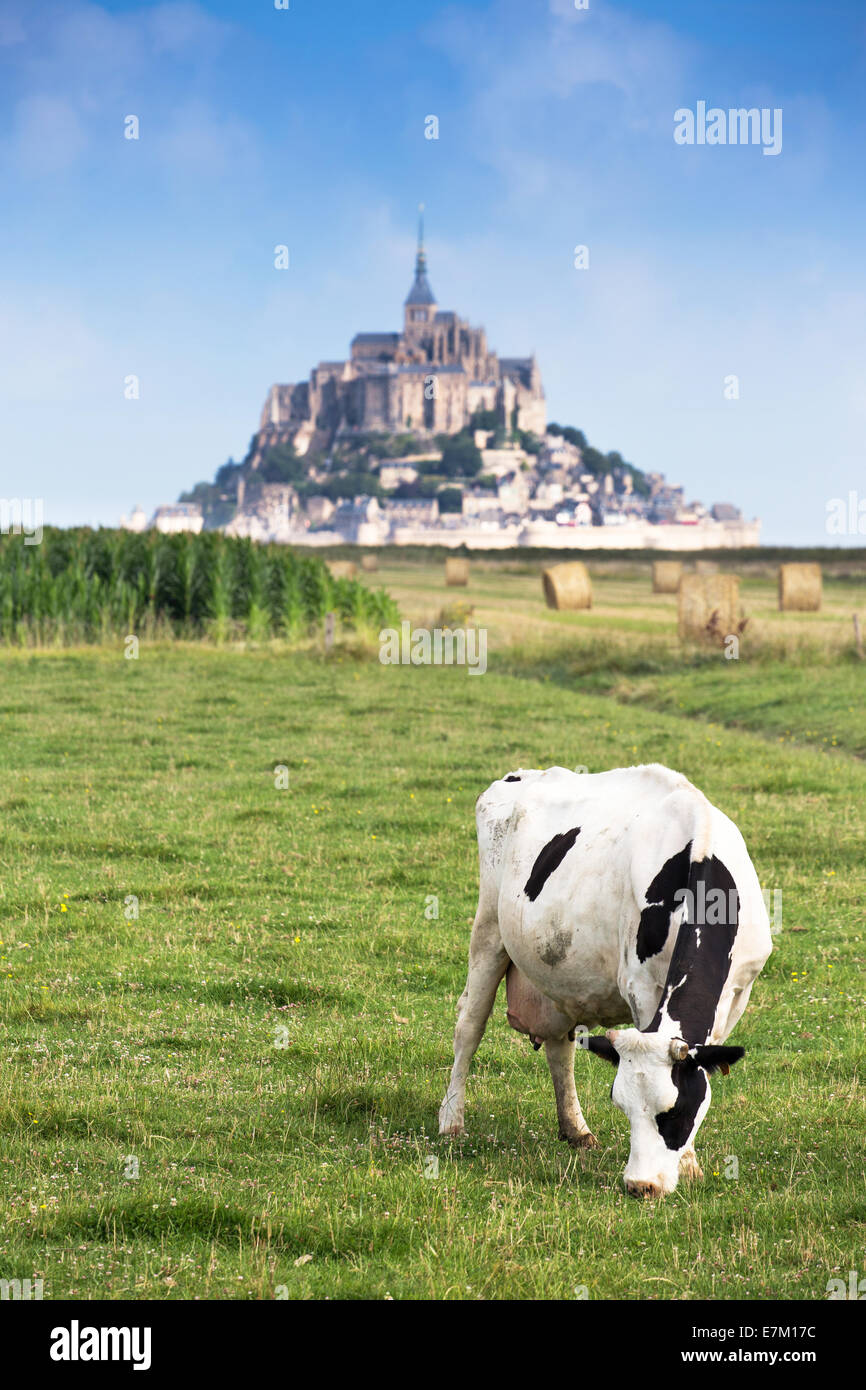 Mont Saint Michel bay listed as UNESCO World Heritage, cow in pasture and Mont Saint Michel in the background - Stock Image