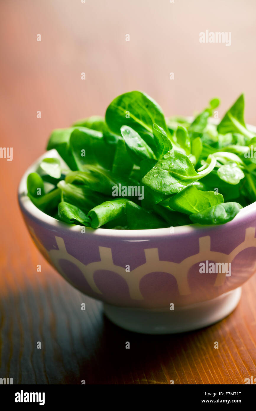 the corn salad, lamb's lettuce in ceramic bowl - Stock Image