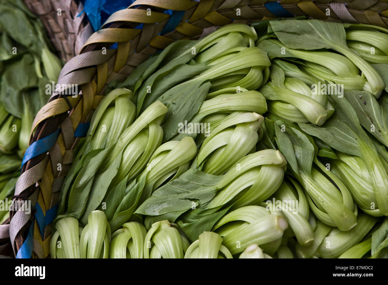 Bok Choy chinese vegetable - Stock Image
