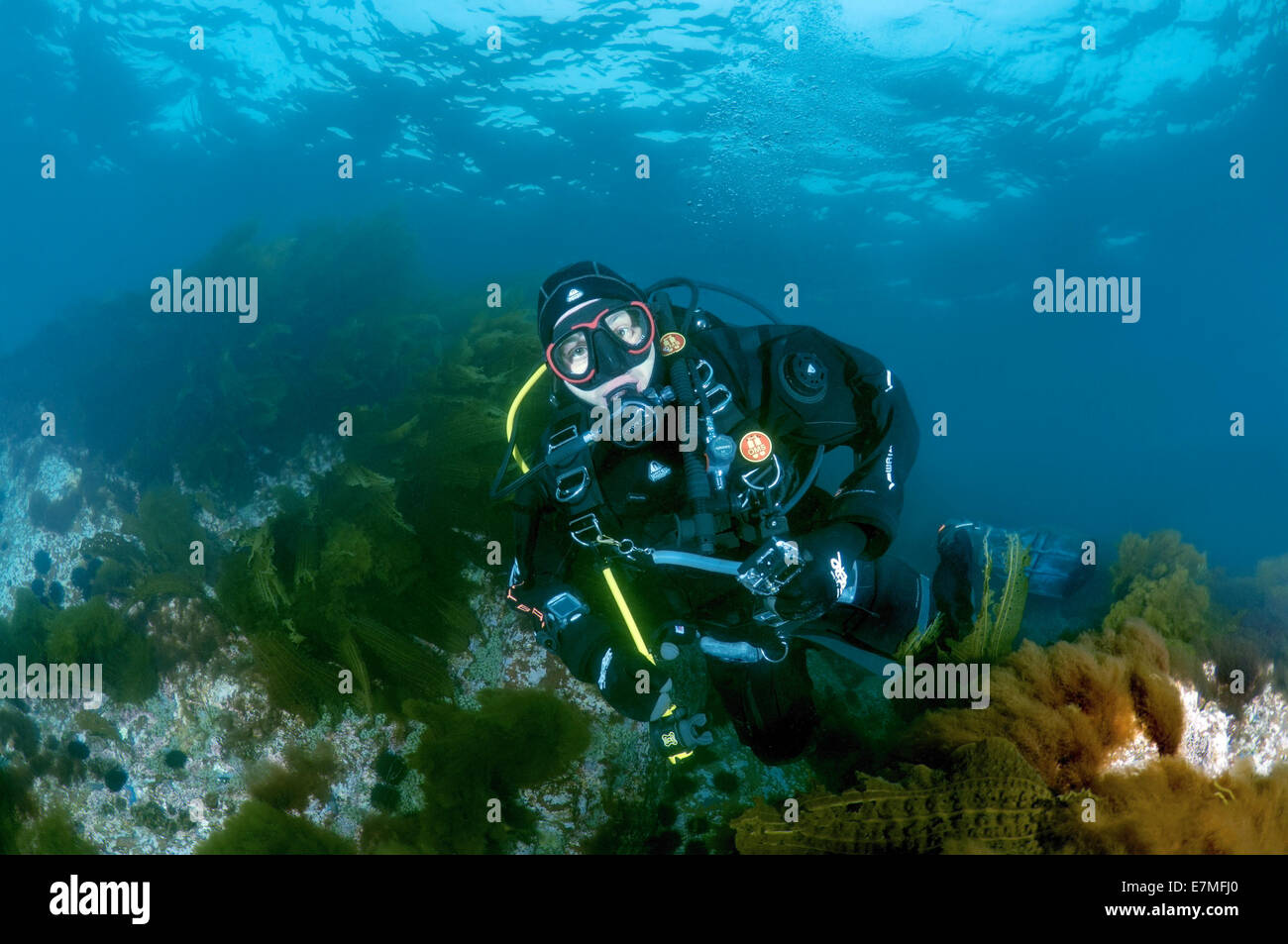 Diving in the north of Primorye. Rudnaya Bay Entry to the bucket. Continuing testing. Fishes