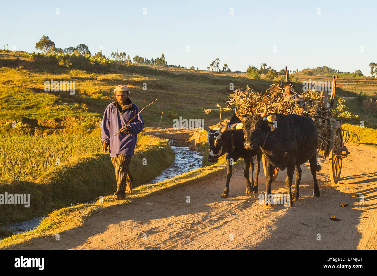 A Farmer with his ox cart - Stock Image