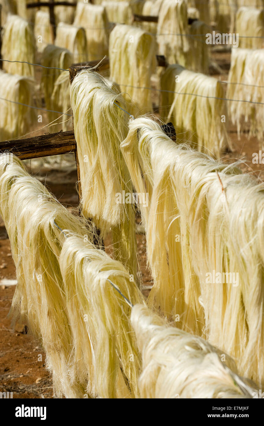 Flax drying in Madagascar - Stock Image