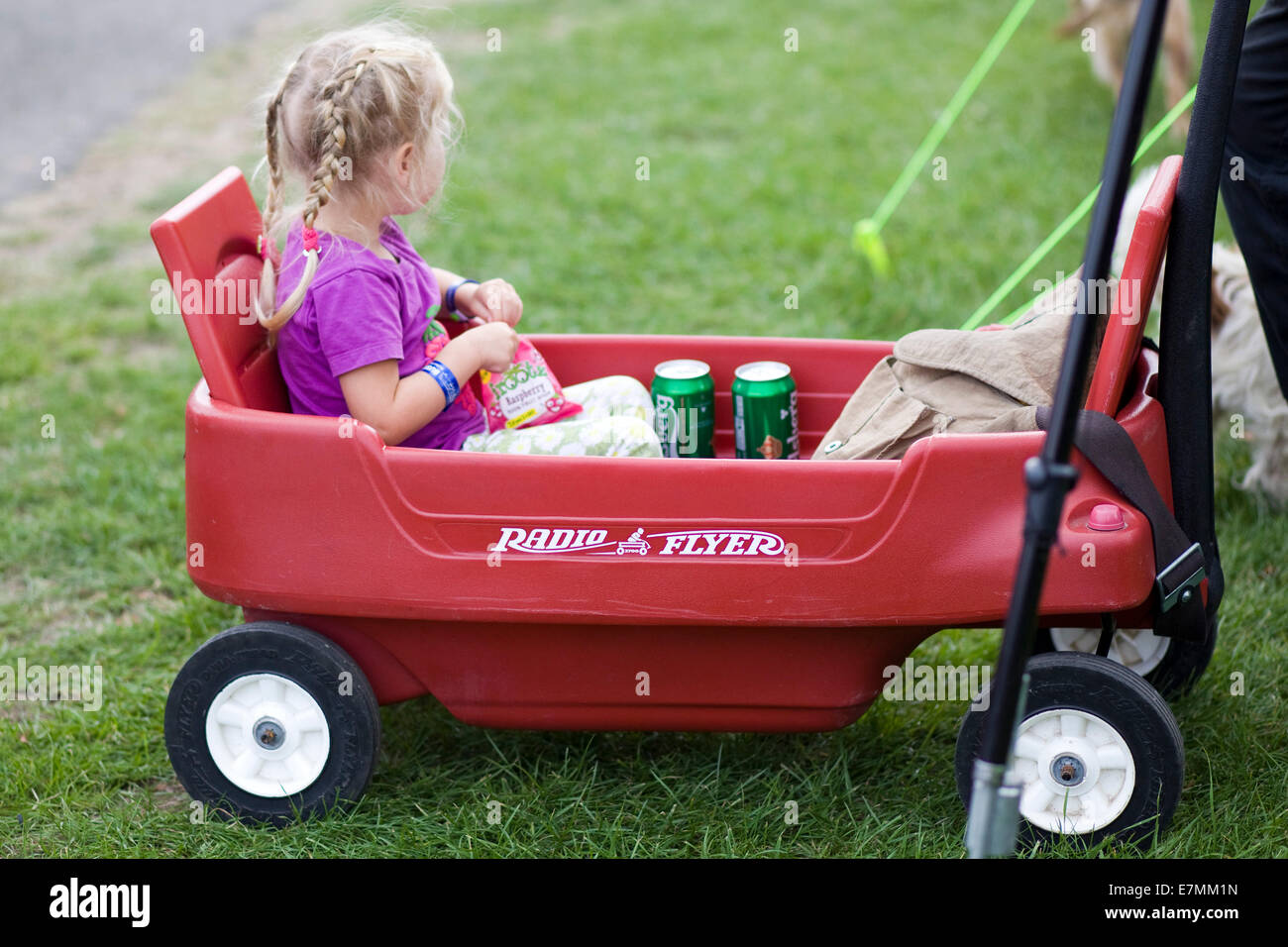 Little girl sitting in a Radio Flyer with cans of Beer Stock Photo