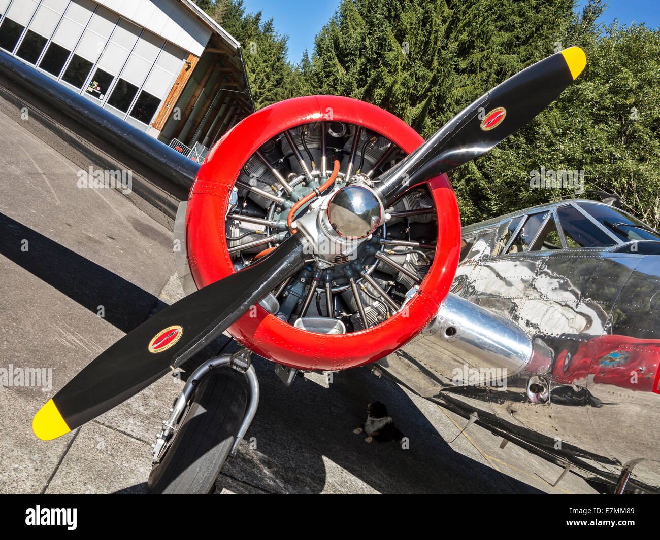 Detail of a Pratt & Whitney aircraft engine on a veteran Beechcraft Twin aircraft (Beechcraft Model-18) that - Stock Image