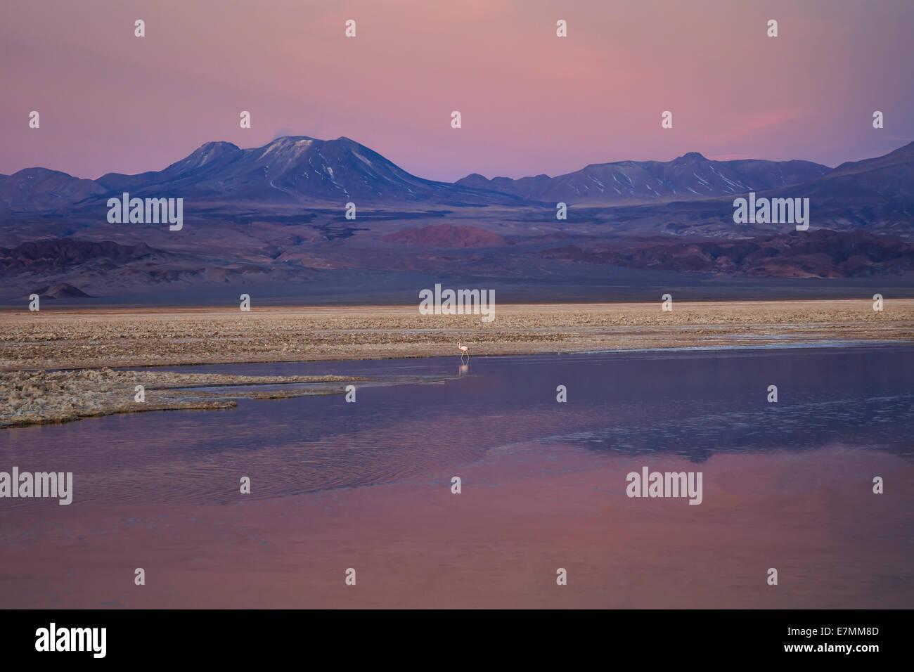 Chile, El Norte Grande, Region de Antofagasta, Salar de Atacama, Laguna Chaxa Stock Photo