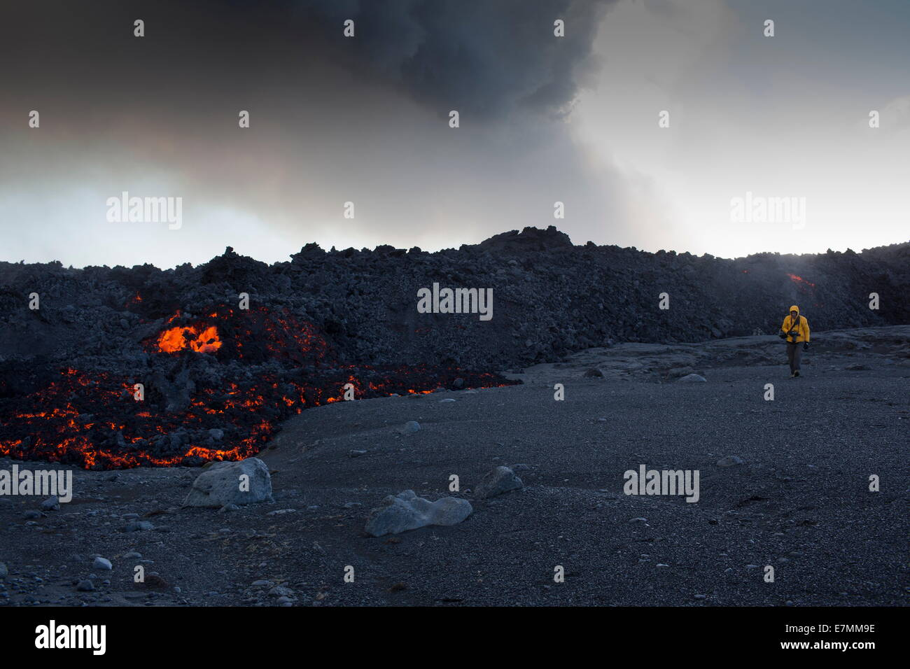 Volcano eruption, Holuhraun, north east Iceland, man walking very closely besides the glowing lava - Stock Image