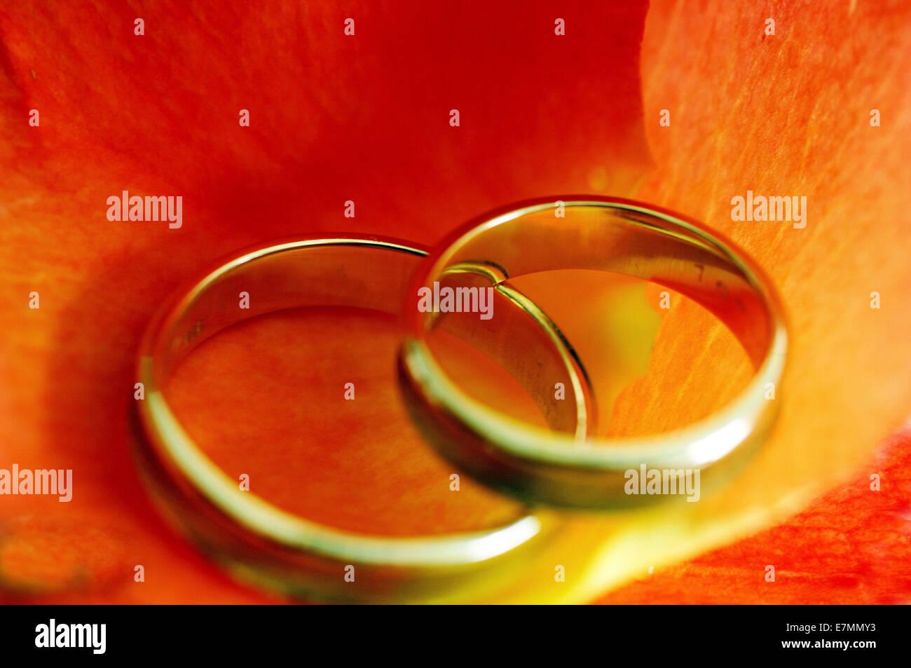 Wedding rings on orange colored flower petals - Stock Image