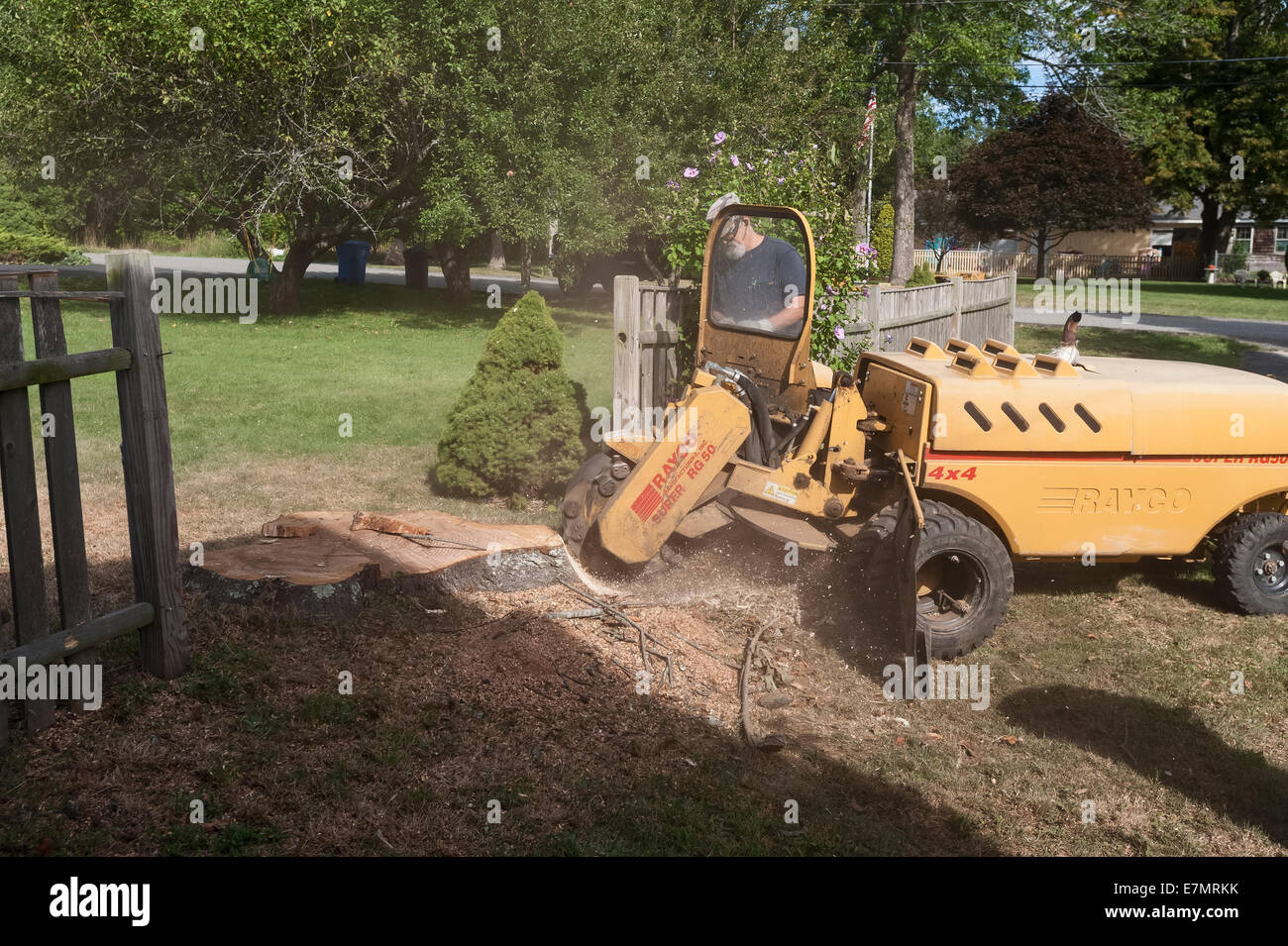 a man using a rayco model super rg50 4x4 stump grinder to remove a rh alamy com Used Rayco RG 50 Tree Stump Grinder Rayco