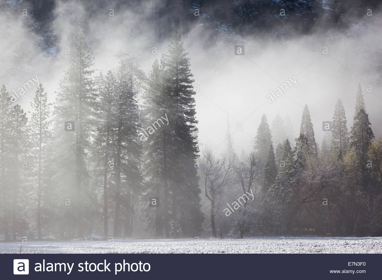 Foggy Spring Morning After Snowstorm in Cook's Meadow, Yosemite National Park, California - Stock Image