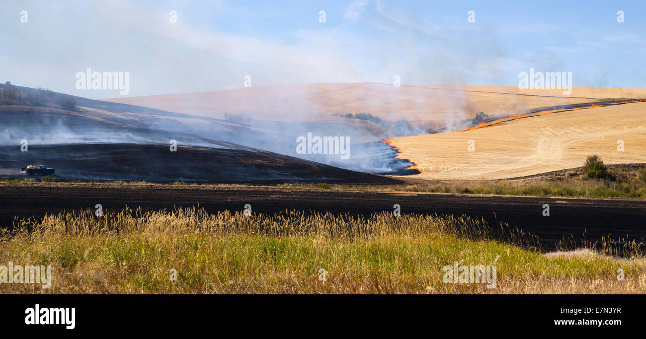 Farmers do a controlled burn before plowing after harvest - Stock Image