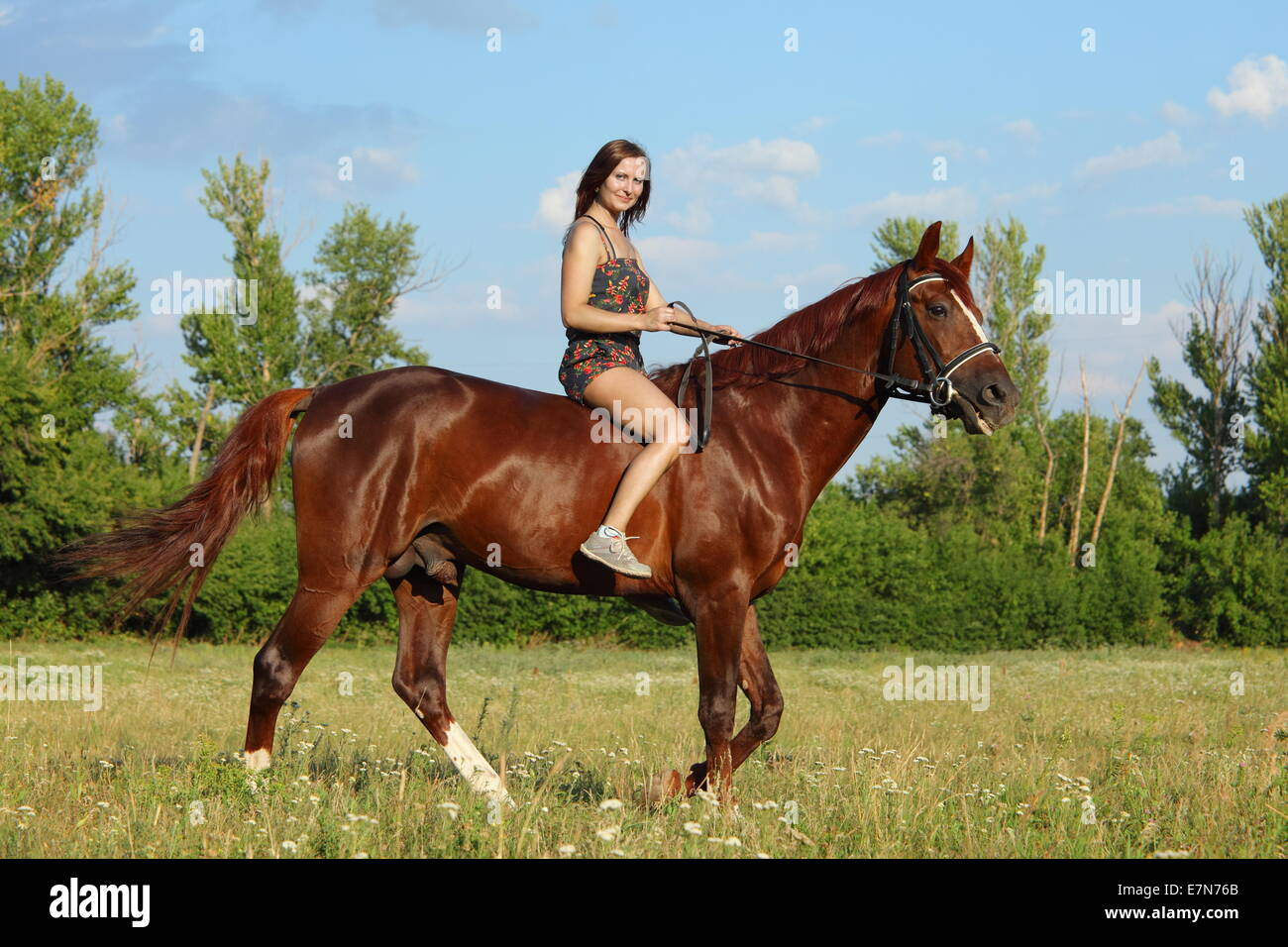 Young dressage rider bare back trotting on a Hanoverian - Stock Image