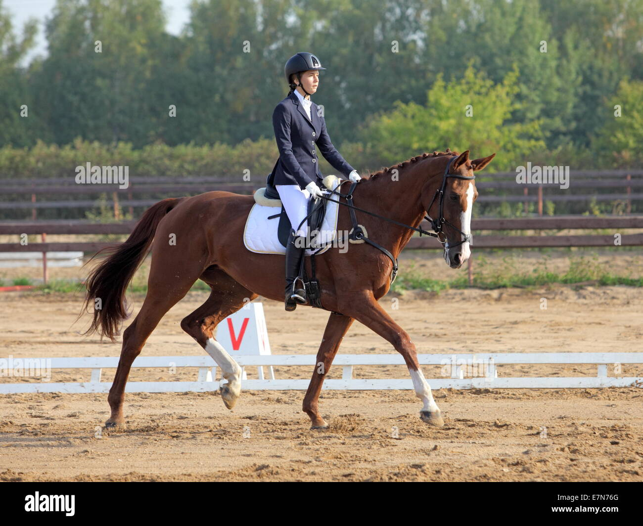 Female dressage rider on a Bavarian breed horse Stock Photo