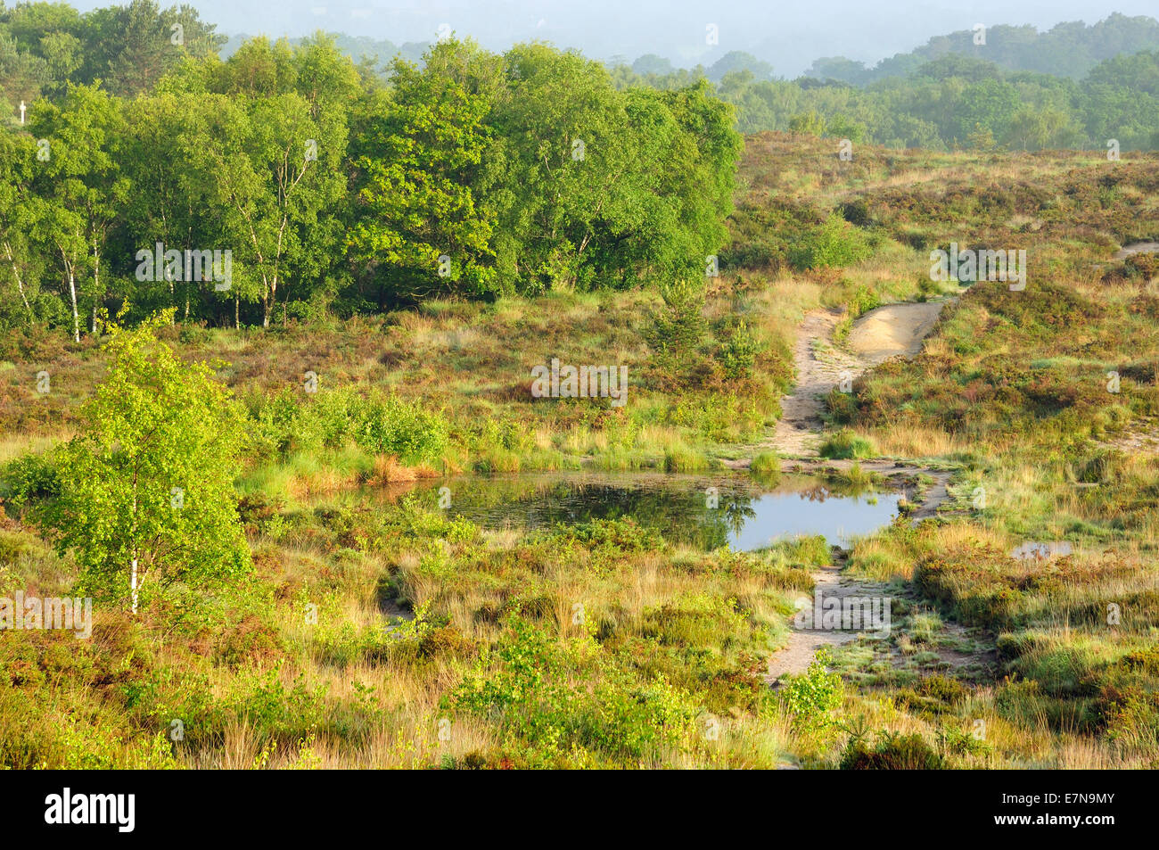 Morning Mist on Bovey Heath, Dartmoor - Stock Image