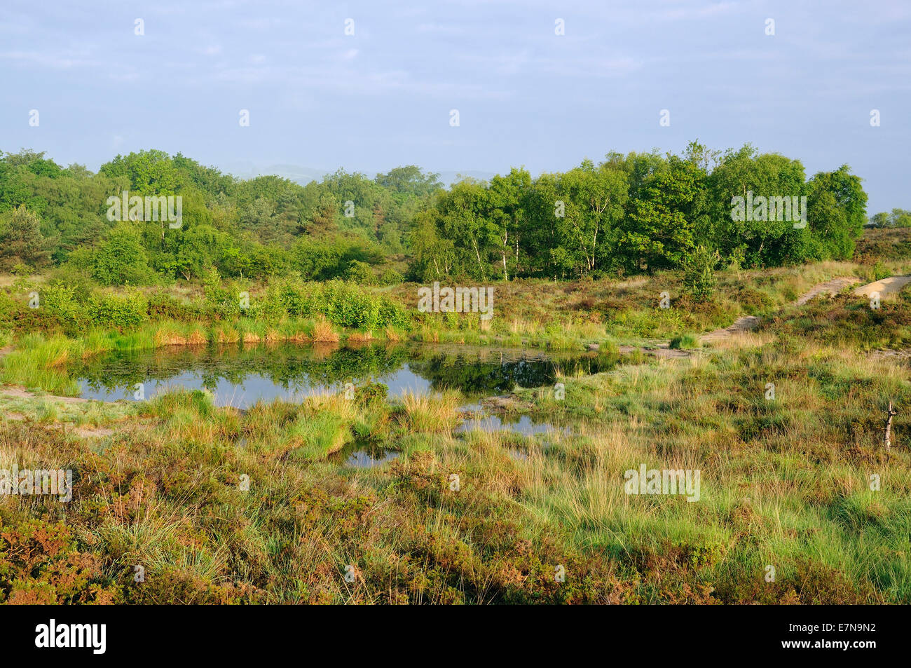 Reflections on Heath Pond, Bovey Heath, Dartmoor - Stock Image