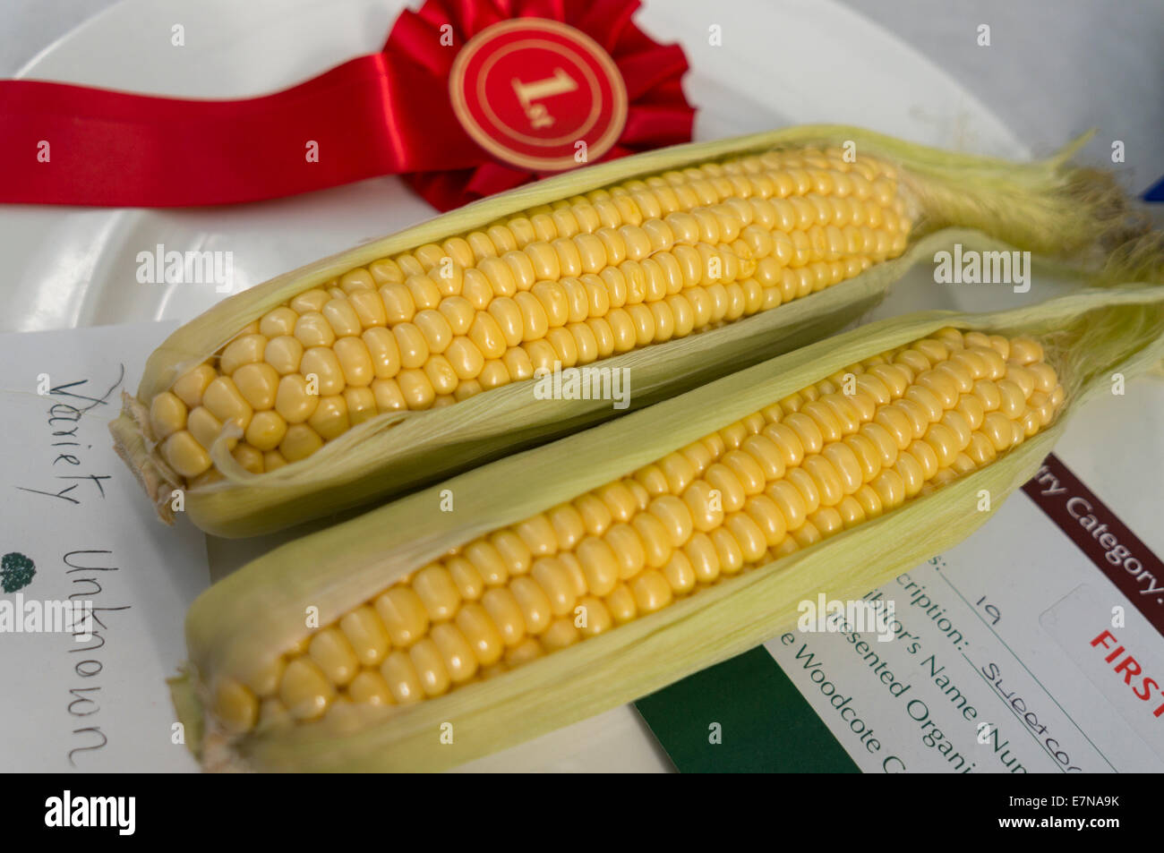1st place sweetcorn - Stock Image