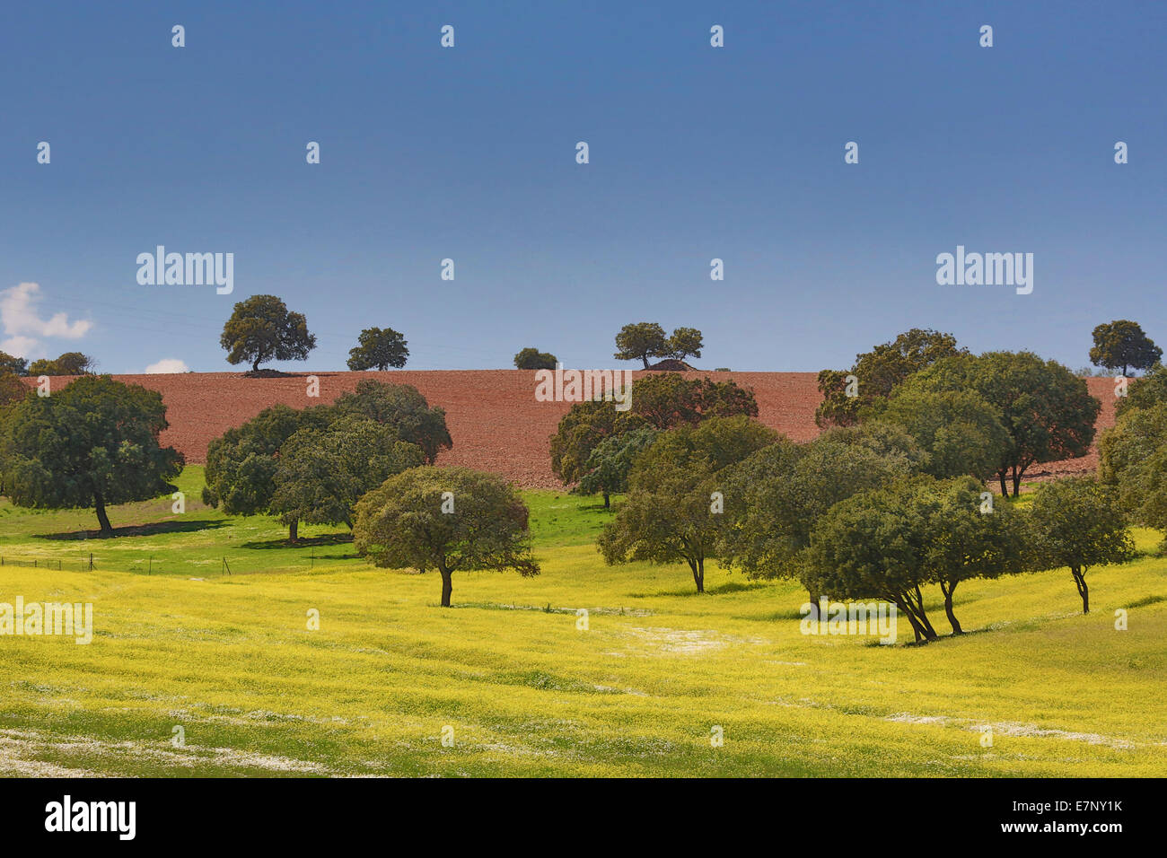 Castile, Ciudad Real, Region, Spain, Europe, colourful, la Mancha, landscape, travel, yellow - Stock Image