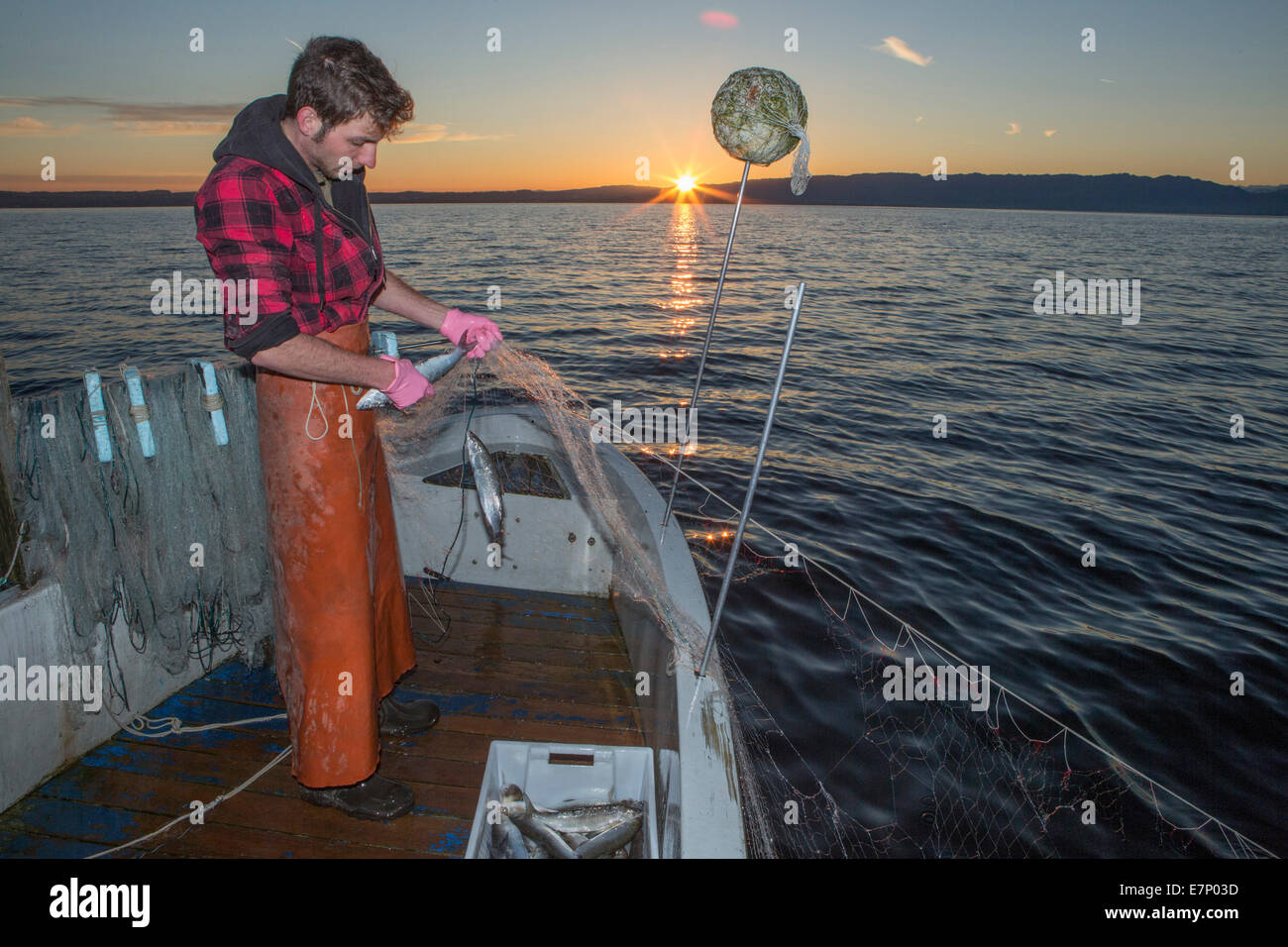 Lake Constance, fisherman, Lake Constance, spring, Claudio Timo Görtz, work, job, occupation, profession, occupations, - Stock Image