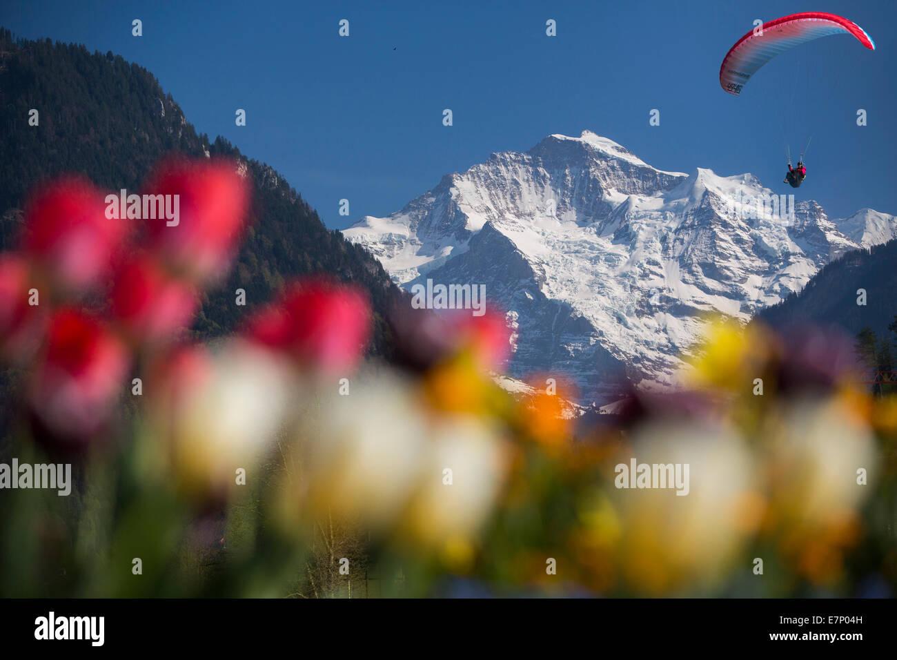 Jungfrau, paraglider, mountain, mountains, sport, spare time, adventure, canton Bern, Bernese Alps, Bernese Oberland, Stock Photo