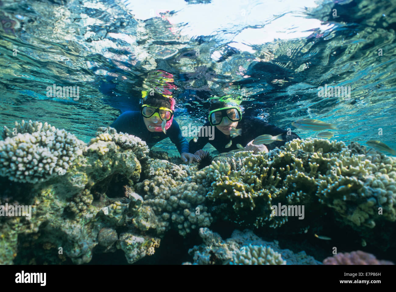 Snorkelers dive in a coral reef surrounded by fish; Sharm-el-Sheik, Egypt-Red Sea - Stock Image